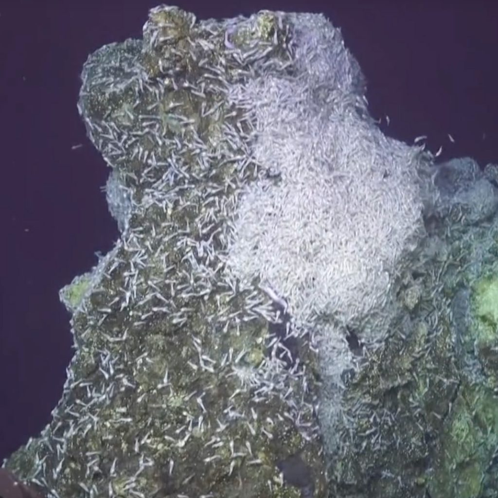 Hydrothermal Vent System with Shrimp